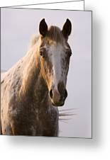 Appaloosa Horse Greeting Card