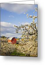Apple Blossom Trees And A Red Barn In Greeting Card