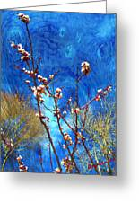 Apricot Blossoms El Valle Greeting Card