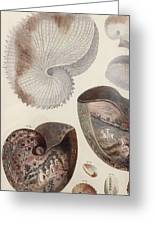 Aquatic Animals - Sea - Shells - Composition - Alien - Wall Art  - Interior Decoration  Greeting Card