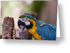 Ara Parrot Greeting Card
