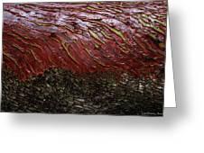 Arbutus Tree Bark Greeting Card