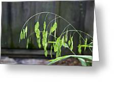 Arching Grass Greeting Card