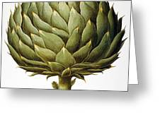 Artichoke, 1613 Greeting Card