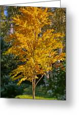 Artistic Fall Colours Greeting Card