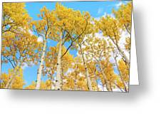 Aspens Above Greeting Card