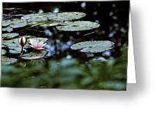 At Claude Monet's Water Garden 6 Greeting Card