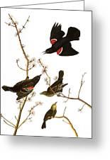 Audubon: Blackbird, (1827) Greeting Card