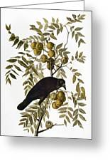 Audubon: Crow Greeting Card
