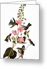 Audubon: Hummingbird Greeting Card