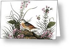 Audubon: Sparrow, (1827-38) Greeting Card