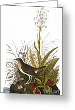 Audubon: Thrush Greeting Card