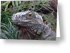 Australia - Kamodo Dragon Greeting Card