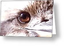 Australia - The Eye Of The Kookaburra Greeting Card