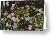Australian Burr Daisies Greeting Card