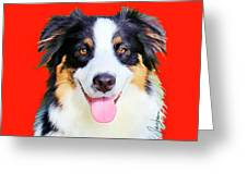Australian Shepherd 4 Greeting Card