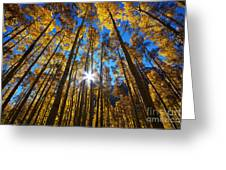 Autumn Aspens Greeting Card by Kate Avery