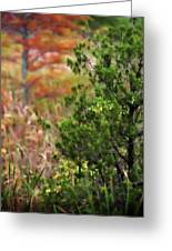 Autumn Colors 20 Greeting Card