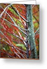 Autumn Colors 25 Greeting Card