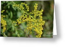 Autumn Goldenrod  Greeting Card