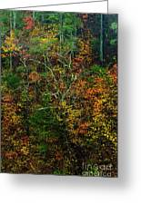 Autumn Hillside Blue Ridge Parkway Greeting Card