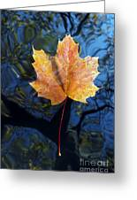 Autumn Leaf On The Water Greeting Card