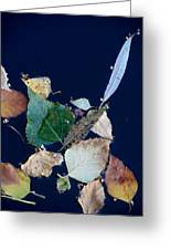 Autumn Leaves Abstraction Greeting Card