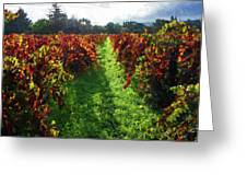 Autumn Vineyard In The Morning  Greeting Card