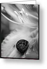 B And White Floral With Snail Greeting Card