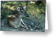 Baby Buck Greeting Card