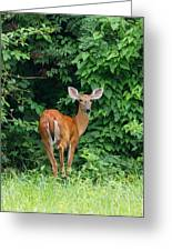 Backyard Deer Greeting Card