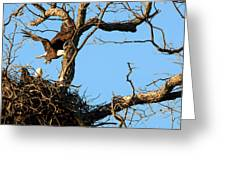 Bald Eagle Leaving The Nest Greeting Card
