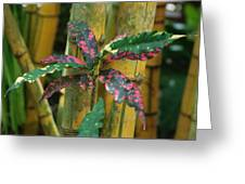 Bamboo Flower Greeting Card