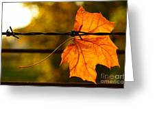 Barbed Autumn Greeting Card