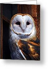 Barn Owl  Greeting Card by Anthony Jones