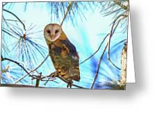 Barn Owl Beauty Greeting Card
