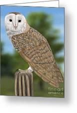 Barn Owl Greeting Card