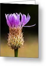 Basket-flower Opening Greeting Card