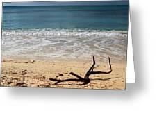 Beach At Grand Turk Greeting Card