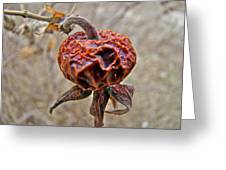 Beach Rose Hip - Rosa Rugosa Greeting Card