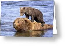 Bear Back Rider Greeting Card