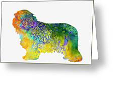 Bearder Collie-colorful Greeting Card