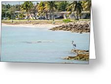 Beautiful Beach And Ocean Scenes In Florida Keys Greeting Card