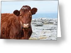 Beautiful Brown Cow On The Burren In Ireland Greeting Card