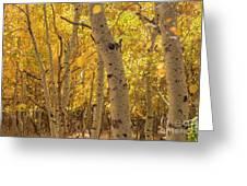 Beautiful Fall Color In California Greeting Card
