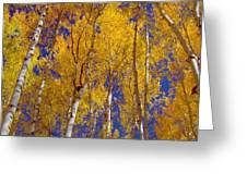 Beautiful Fall Season Nature Renews Itself  Theme Green Trees Reaching For The Sky  Save The Environ Greeting Card