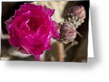 Beavertail Cactus Blossom 2 Greeting Card