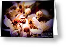 Bee On Apple Blossoms Greeting Card