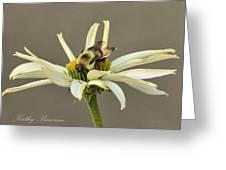 Bee On Coneflower 2 Greeting Card