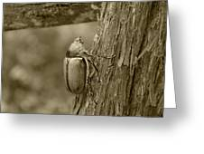 Beetle On A Log Greeting Card